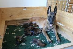 Tatoo und ihre Babies 1 Tag