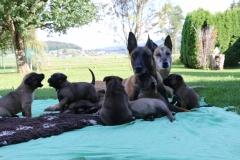 Maman et ses chiots avec Grand-Maman