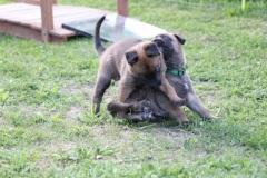 Leyton et Little one