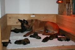 Tatoo et ses bébés 1 jour