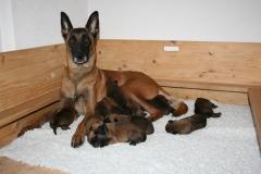 Tatoo et ses bébés 1 semaine