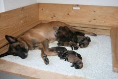Tatoo et ses 12 bébés