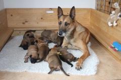 Deejay et ses bébés 2 semaines