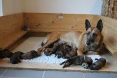 Deejay et ses bébés