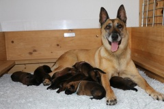 Deejay et ses chiots 1 semaine