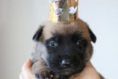 Le petit Roi Galak