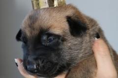 Le petit Roi Gladiateur