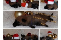 Tous nos voeux de Noël